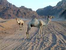 Liberi nel deserto del SINAI