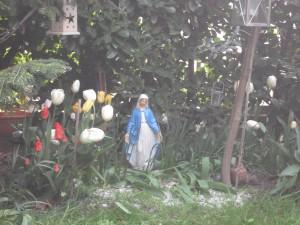 Madonnina fra i tulipani...