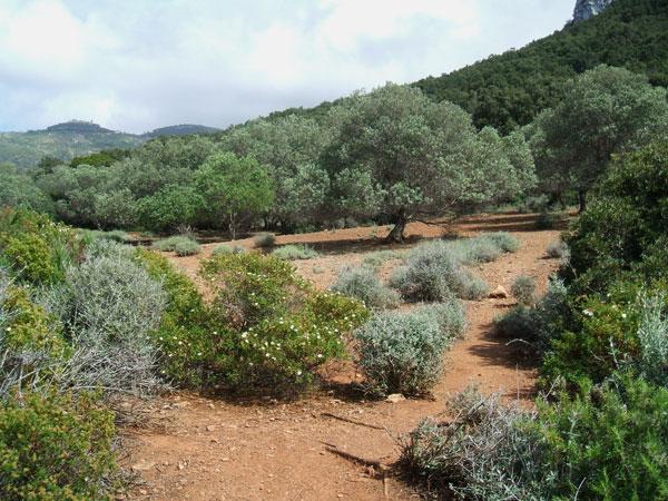 macchia-mediterranea-in-fiore