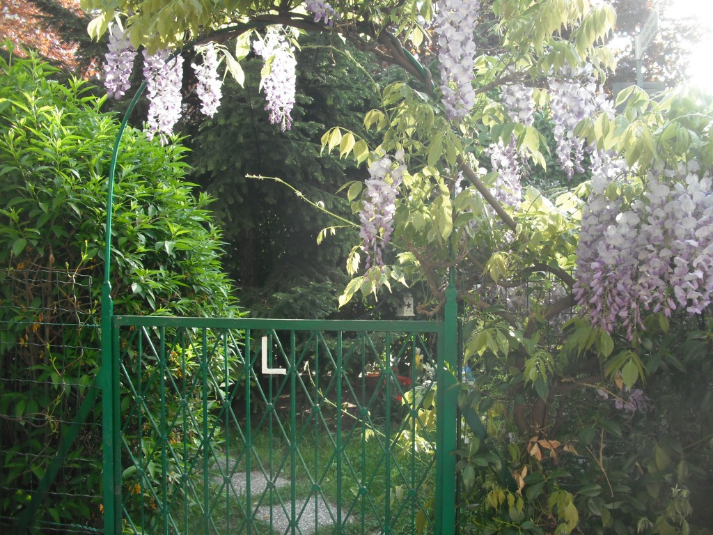 Il mio giardino incantato